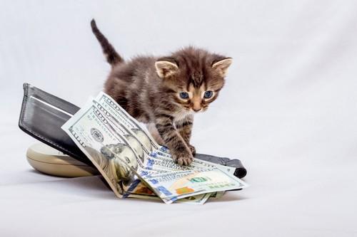 財布の上の札を手でおさえる子猫