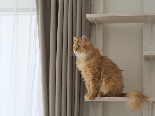キャットタワーの上に座る猫