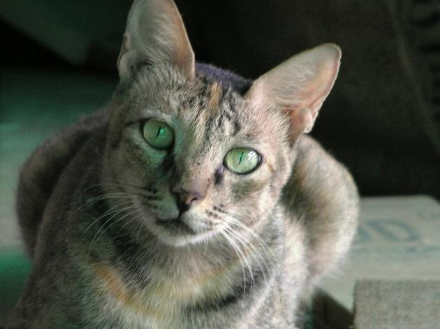 じっと見てる猫