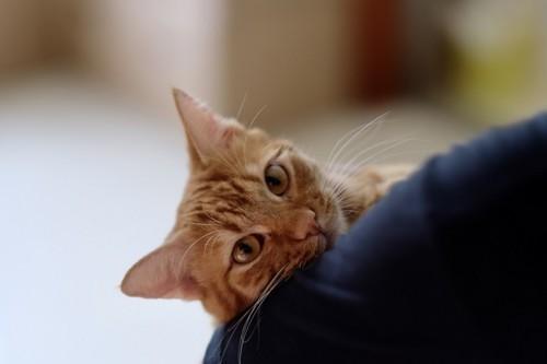 小首をかしげこちらを見る猫