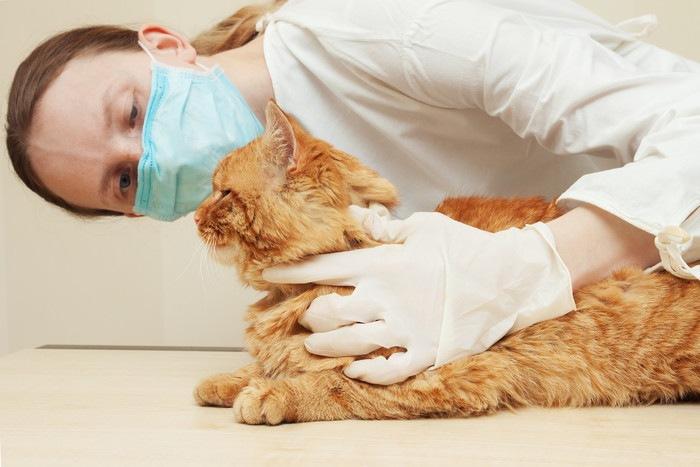 医者に診てもらっている猫