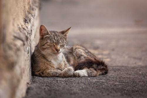 寝ている野良猫