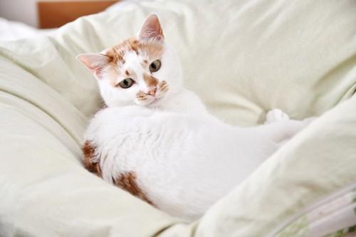 布団に寝転ぶ猫