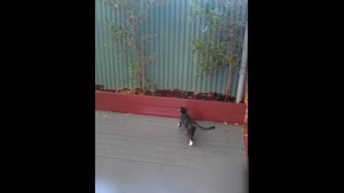 フェンスを狙う猫