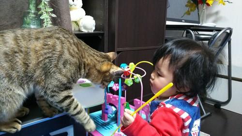 猫と赤ちゃんが遊んでる写真