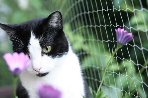 網と紫の花を見る猫