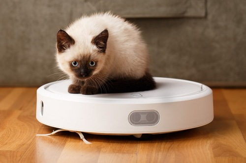 お掃除ロボットの上に乗る猫