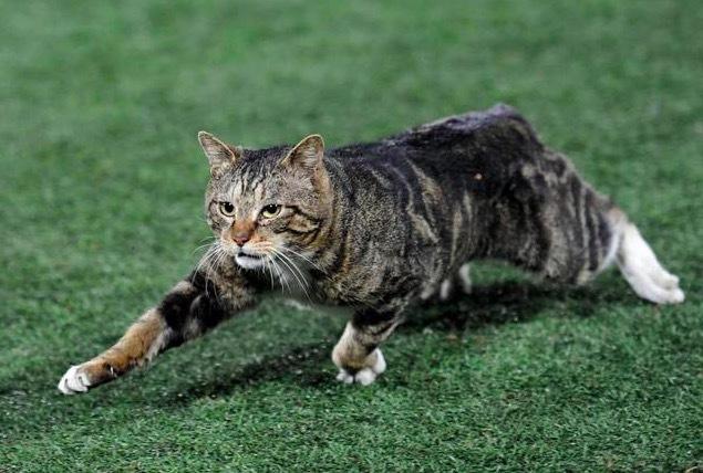 グラウンドに乱入した猫