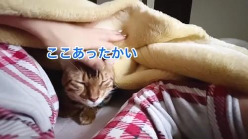 毛布の中にいる猫