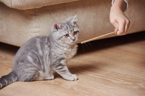 棒を見る猫