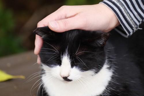 迷惑顔の猫
