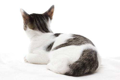お尻を向けて座る猫