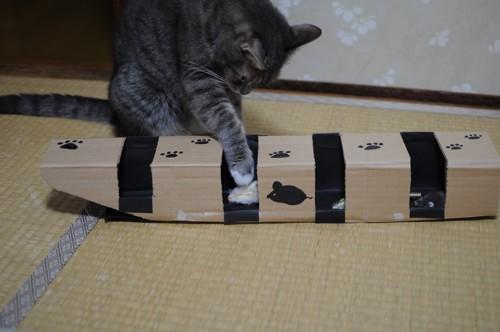 猫パンチを繰り出す
