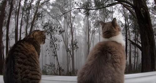 霧を眺める2匹の猫