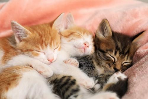 くっついて一緒に寝る三匹の子猫