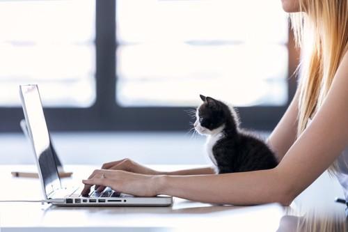 パソコンする飼い主と見守る子猫