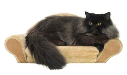 猫用のソファーでくつろぐ黒いペルシャ