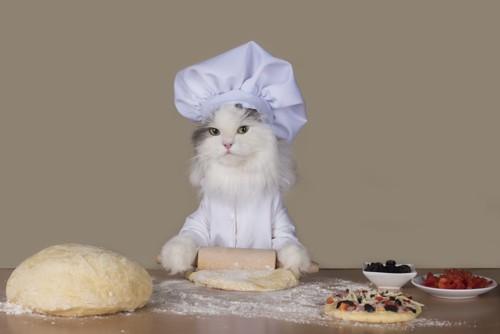 ピザを作る猫