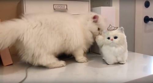 尻尾を噛む猫
