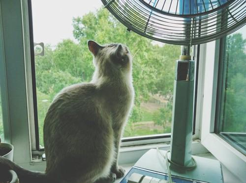 窓辺で扇風機の隣に座る猫