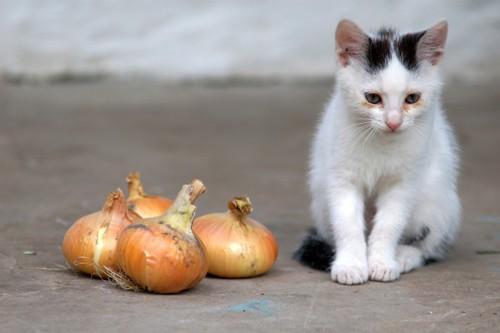 猫と玉ねぎ