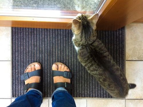 玄関先の人間の足下にいる猫