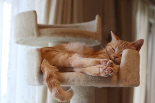 キャットタワーにはまって眠る猫