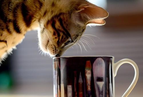 コップの中を見つめる猫