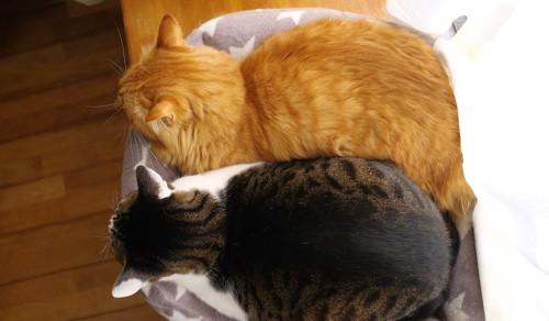同じ姿勢で寝る2匹の猫