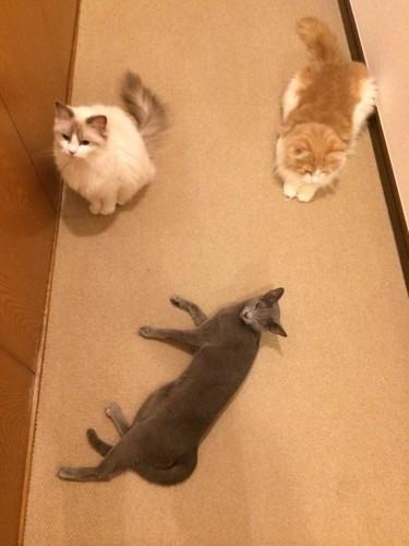 パンサー管の猫たち