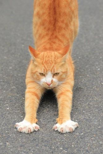 爪を出して伸びをする猫
