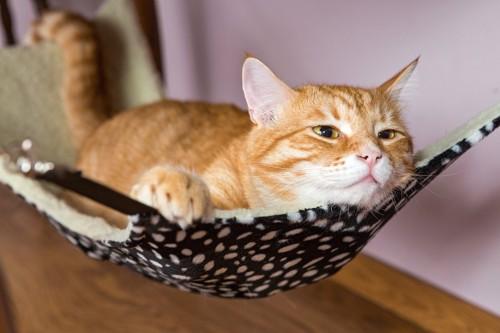 ハンモックの上でくつろぐ猫