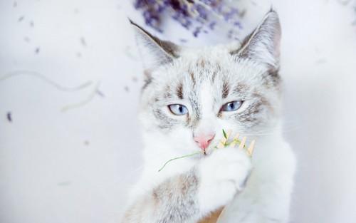 フォークを持ってハンターみたいな顔をしている猫