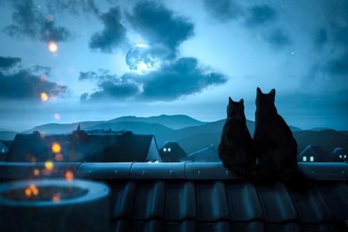 夜空を見つめる猫