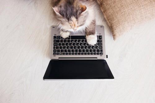 パソコンを操作しているような猫