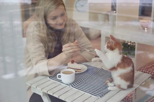 猫におやつをあげる女性