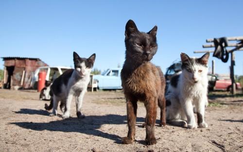 島にいる猫達