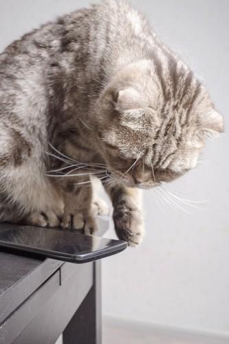 スマホを落とそうとする猫