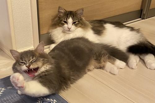 のんびりしている猫
