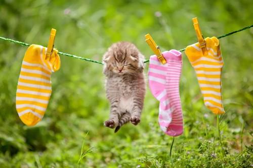 干される子猫