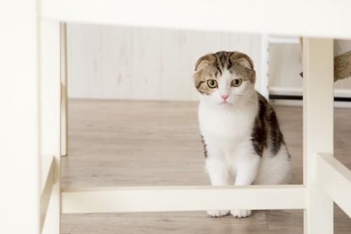 テーブルの下にいる猫