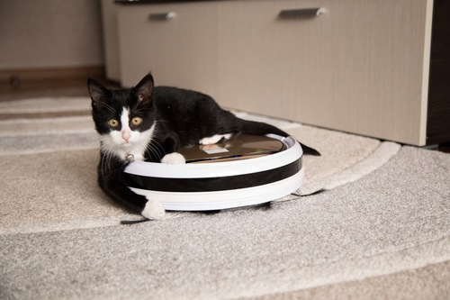 お掃除ロボットのブラシに前足を伸ばす猫