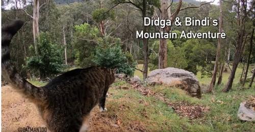 山の中に佇むキジトラ猫ディジャ