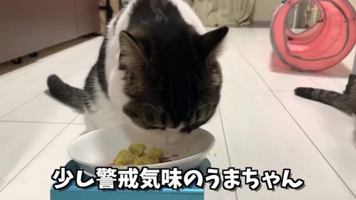 さつまいものニオイを嗅ぐ猫