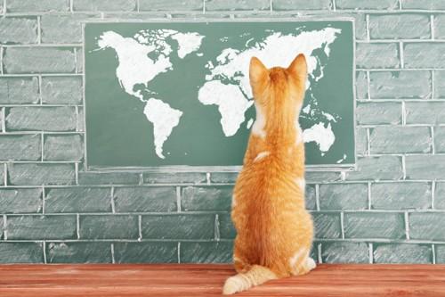 世界地図と猫