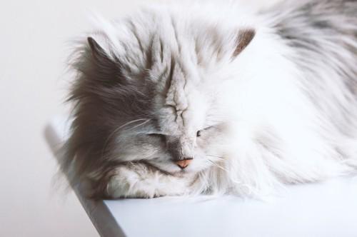 疲れている猫