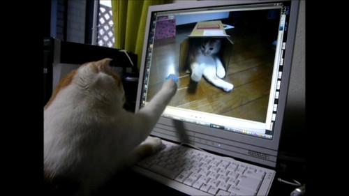 画面を触る猫
