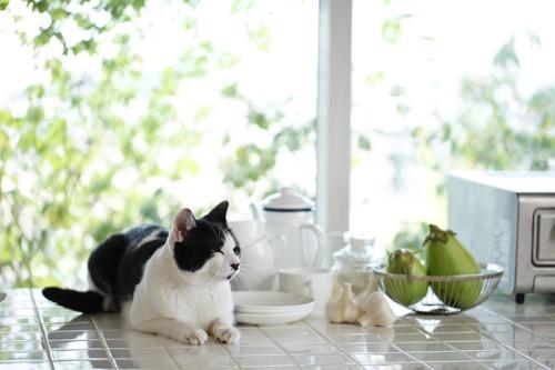 整頓されたキッチンでくつろぐ猫