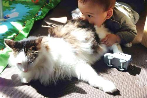下の子にお尻を咬まれる愛猫