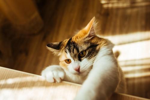怖い目でテーブルの上に手を伸ばしている猫